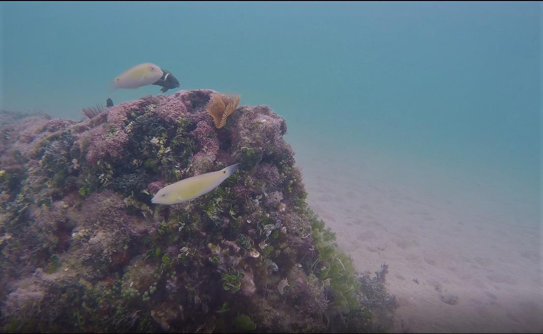 マエサトビーチでシュノーケルしてみた!魚はいる?サンゴはあるの?